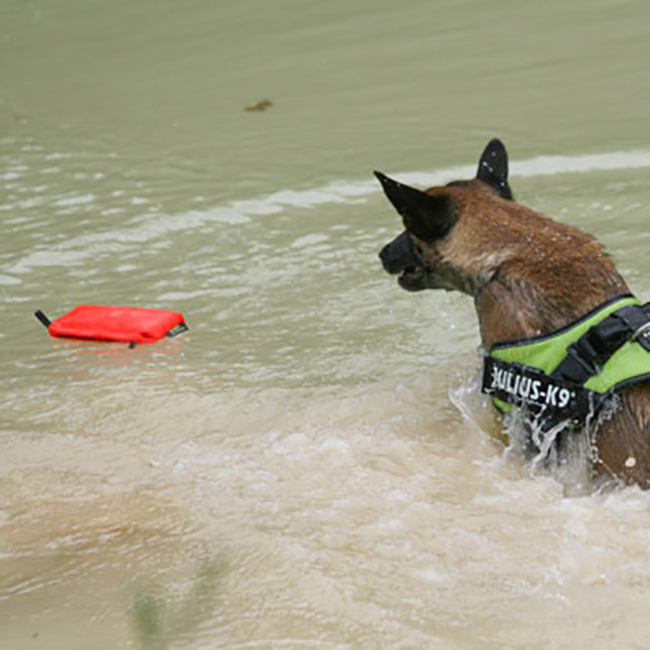 Dog playing in water and fetching the Aqua Food Dummy