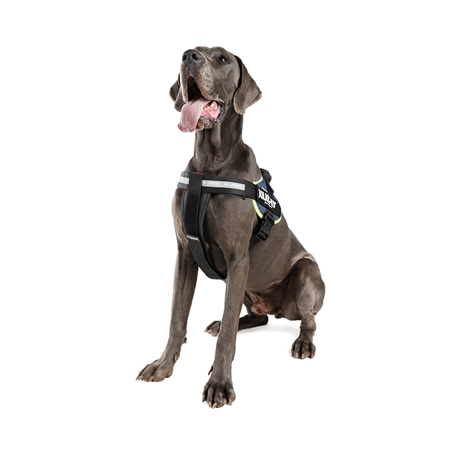 Large dog wearing IDC Powerharness with Julius K9 IDC Chestpad on it
