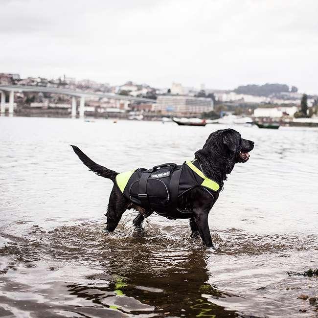 Julius K9 NZ IDC Multifunction Dog Vest 2 in 1 on dog in water