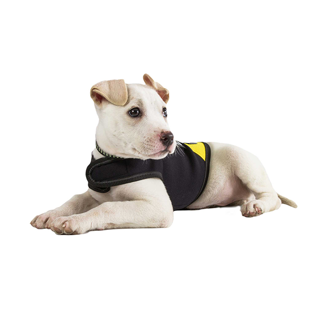 Julius K9 NZ IDC Neoprene Jacket on puppy