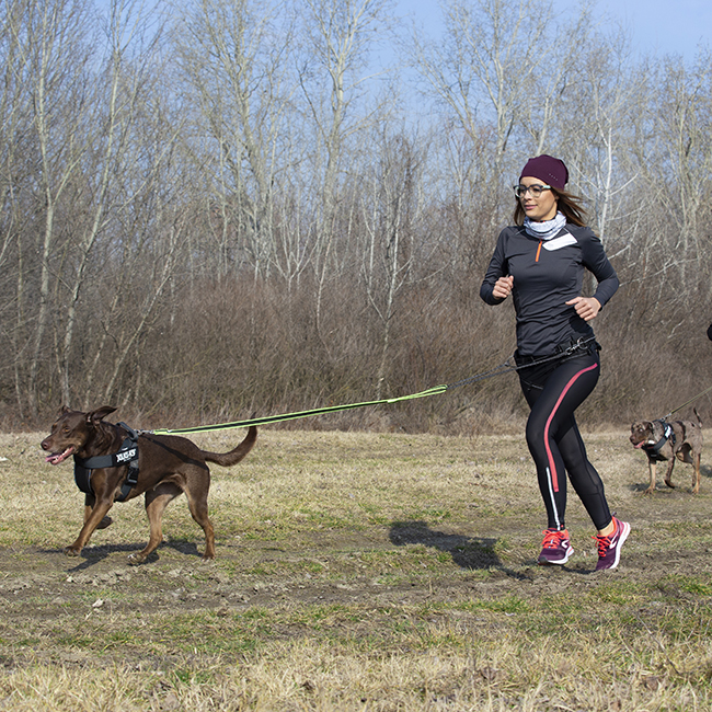 Julius K9 Premium Jogging Set on woman and dog running