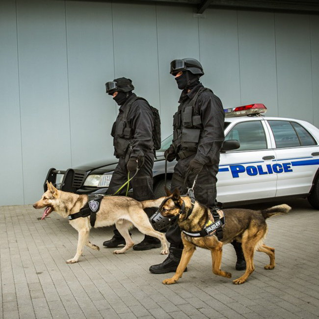 Law enforcement using the Julius K9 NZ Tactical IDC Stealth Powerharness