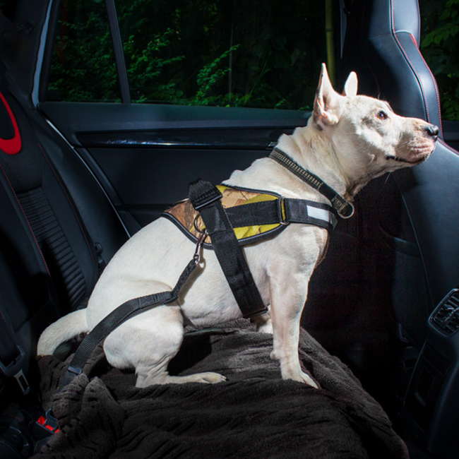 Carabiner on Julius K9 NZ Mobility Control Car Tether (Seatbelt Connector) on dog in car