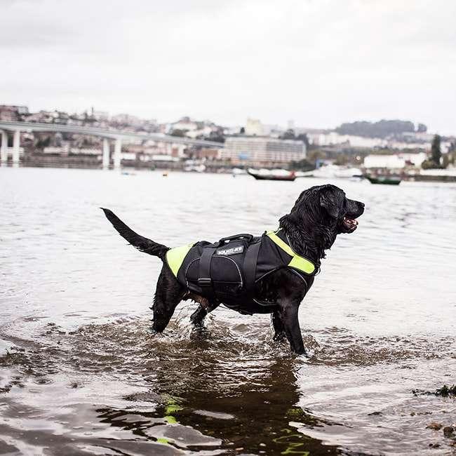 Black Labrador wearing IDC Multifunctional Dog Vest 3in1