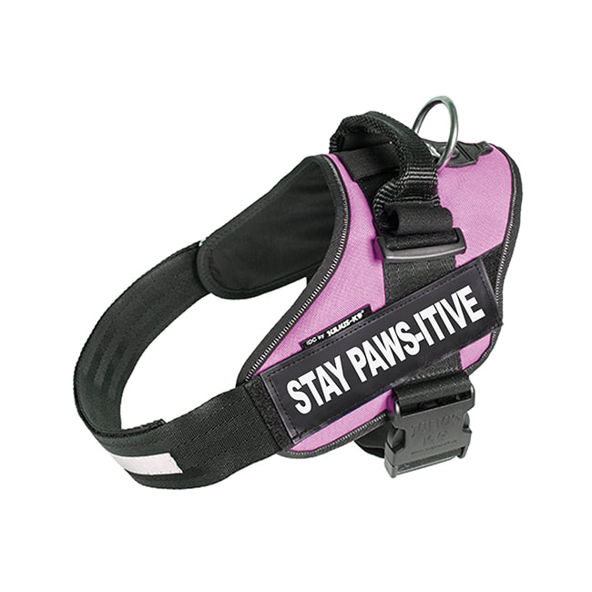 Stay Paws-itive custom label on pink Powerharness
