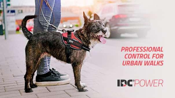 Julius-K9 NZ IDC Powerharness gives professional control on everyday walks
